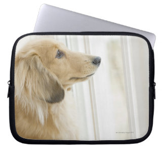Dog looking out window computer sleeve