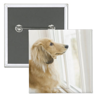 Dog looking out window pinback button