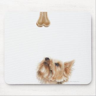 Dog looking up at bone mouse pad