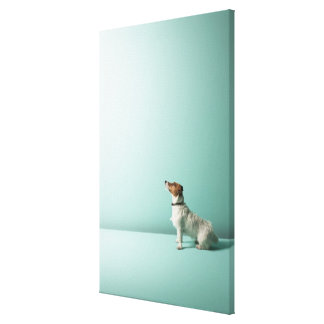 dog looking up into space gallery wrap canvas