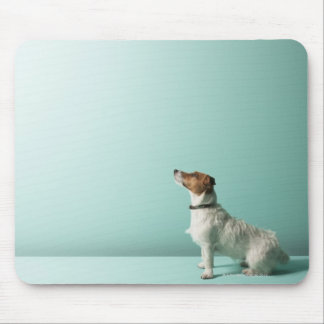 dog looking up into space mouse pad