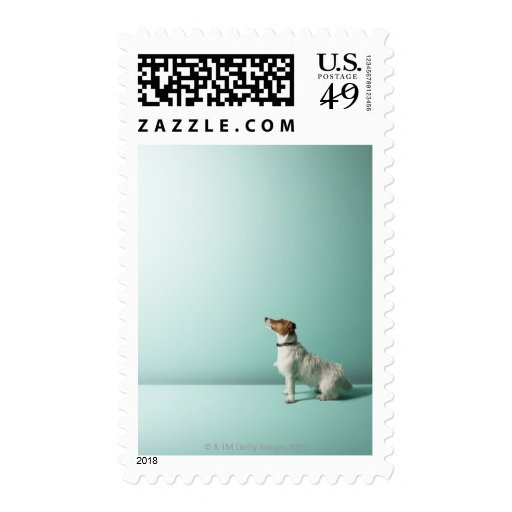 dog looking up into space postage stamp