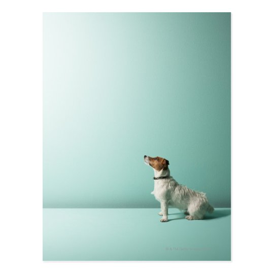 dog looking up into space postcard