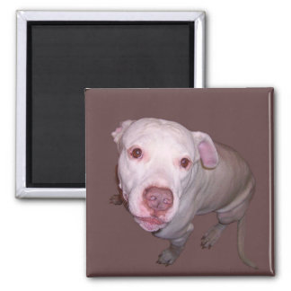 Dog looks at you 2 inch square magnet