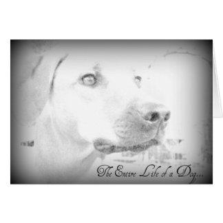 Dog Loss Card