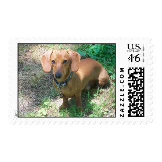 Dog lover postage