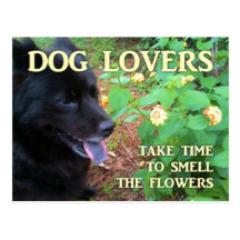 Dog Lovers Flowers Postcard