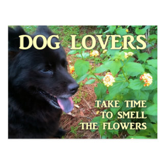 Dog Lovers Flowers Postcard