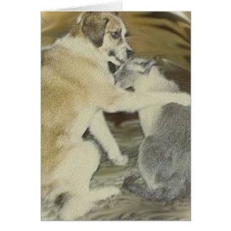 dog loves cat cards