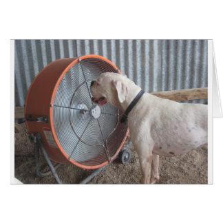 Dog- Loving the Breeze Greeting Card