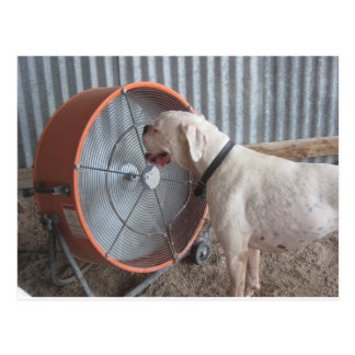 Dog- Loving the Breeze Postcard