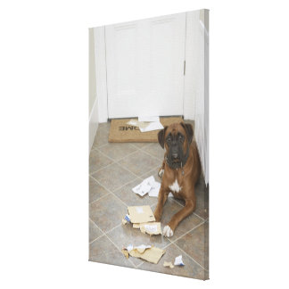 Dog lying by doormat and chewed mail canvas print