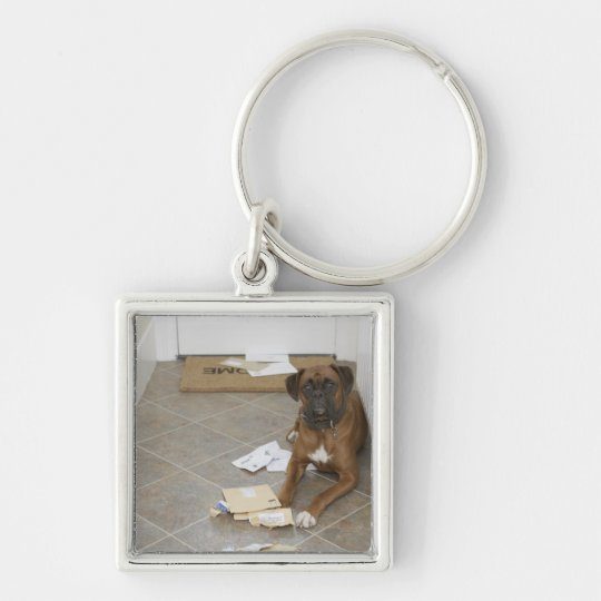 Dog lying by doormat and chewed mail keychain