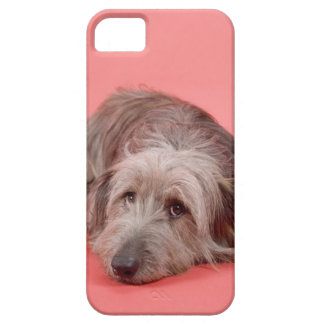Dog lying down iPhone SE/5/5s case