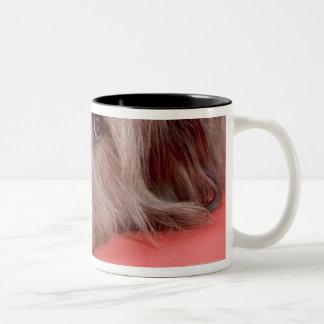 Dog lying down mug
