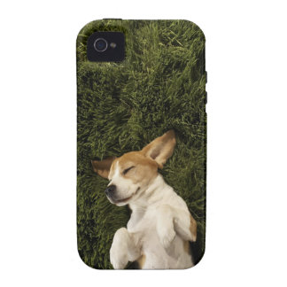 Dog Lying in Grass Sleeping Vibe iPhone 4 Case