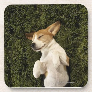 Dog Lying in Grass Sleeping Coaster