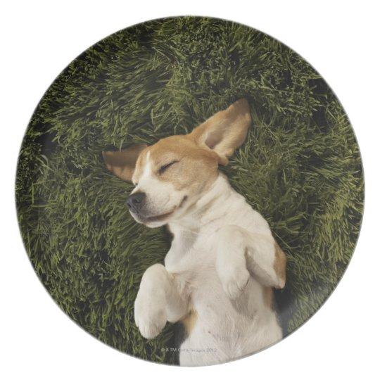 Dog Lying in Grass Sleeping Melamine Plate