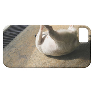 Dog lying on the floor iPhone SE/5/5s case