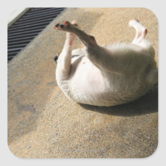 Dog lying on the floor square sticker