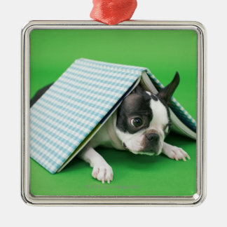 Dog lying under book metal ornament