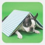 Dog lying under book square sticker