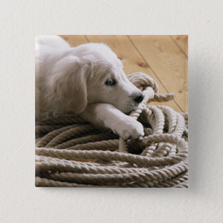 Dog lying with rope on wooden floor, elevated button