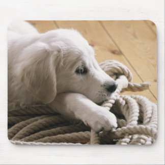 Dog lying with rope on wooden floor, elevated mouse pad