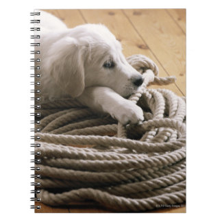 Dog lying with rope on wooden floor, elevated spiral notebook
