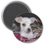 Dog-Magnet. lindo Iman De Frigorífico