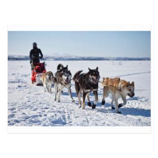 Dog Mushing Alaska Postcard