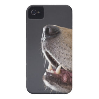 Dog nose and mouth, close-up iPhone 4 case