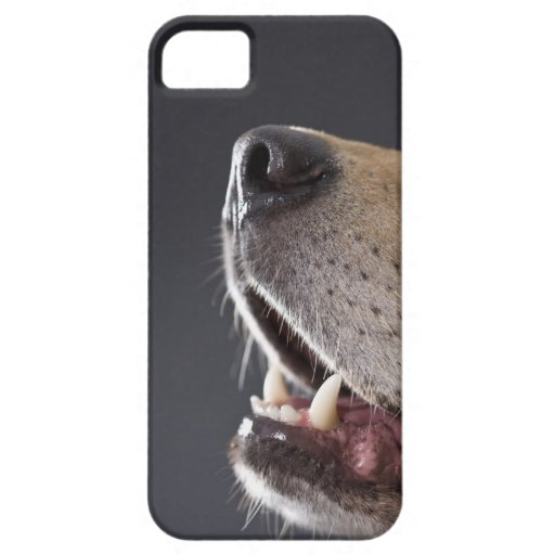 Dog nose and mouth, close-up iPhone 5 cover