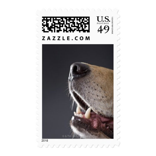 Dog nose and mouth, close-up postage