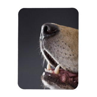 Dog nose and mouth, close-up magnet