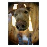 Dog Nose Customizable Card