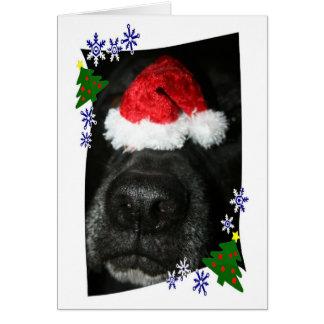 Dog Nose Wearing Santa hat, black lab mix Card