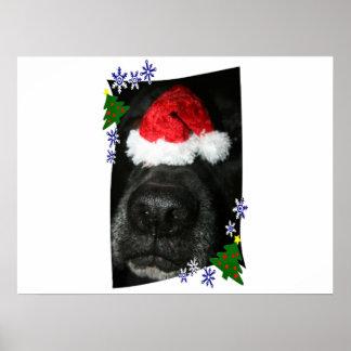 Dog Nose Wearing Santa hat, black lab mix Print