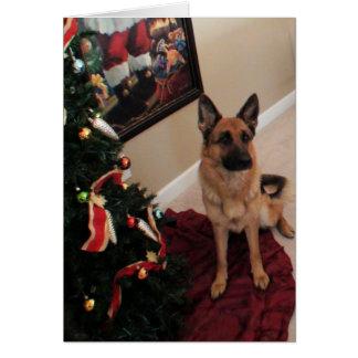 dog of German shepherd of Christmas Card