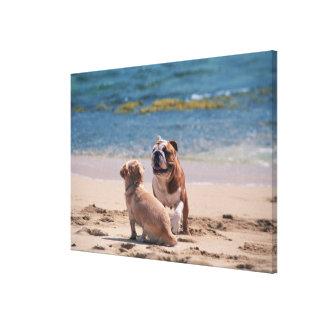 Dog of Sandy Beach 2 Canvas Print