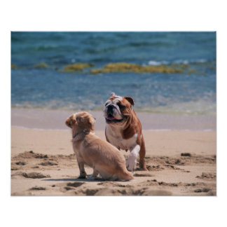 Dog of Sandy Beach Poster