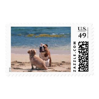 Dog of Sandy Beach Stamp