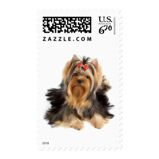 Dog of show class postage