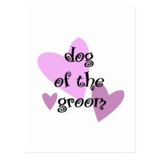 Dog of the Groom Postcard