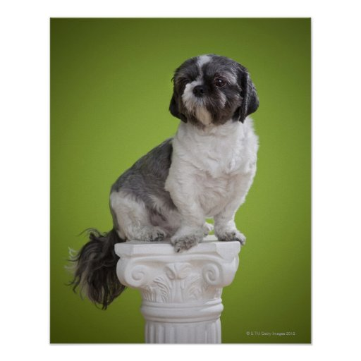 Dog on a column poster