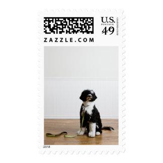 dog on a leash postage