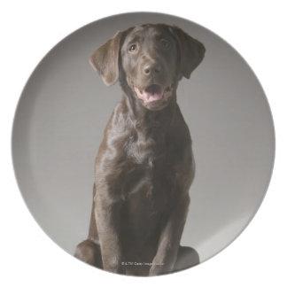 dog on a pedestal dinner plates