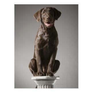 dog on a pedestal postcard