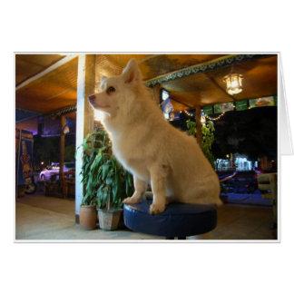 Dog on barstool card