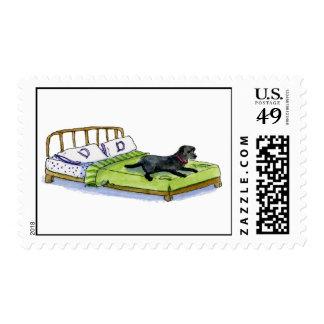 dog on  bed postage